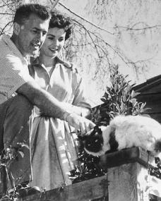 Jean Simmons and Stewart Granger pet a Siamese cat