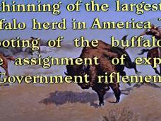 Main title from The Last Hunt (1956) (6). … shooting of the buffalo is the assignment of expert Government riflemen