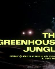 Main title from the 1972 'The Greenhouse Jungle' episode of Columbo (1971-2003) (2)